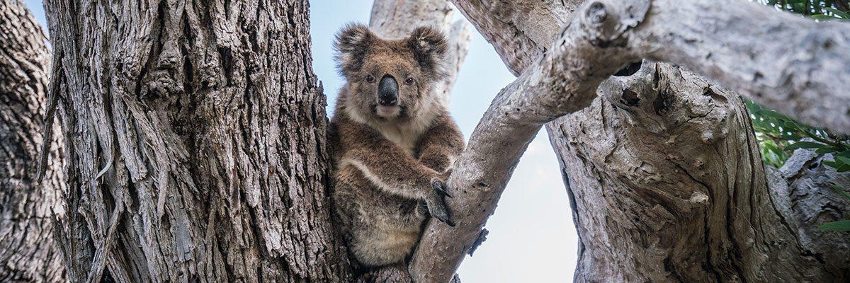 Südküste Australien: Highlights von Adelaide bis Perth (mit Route)