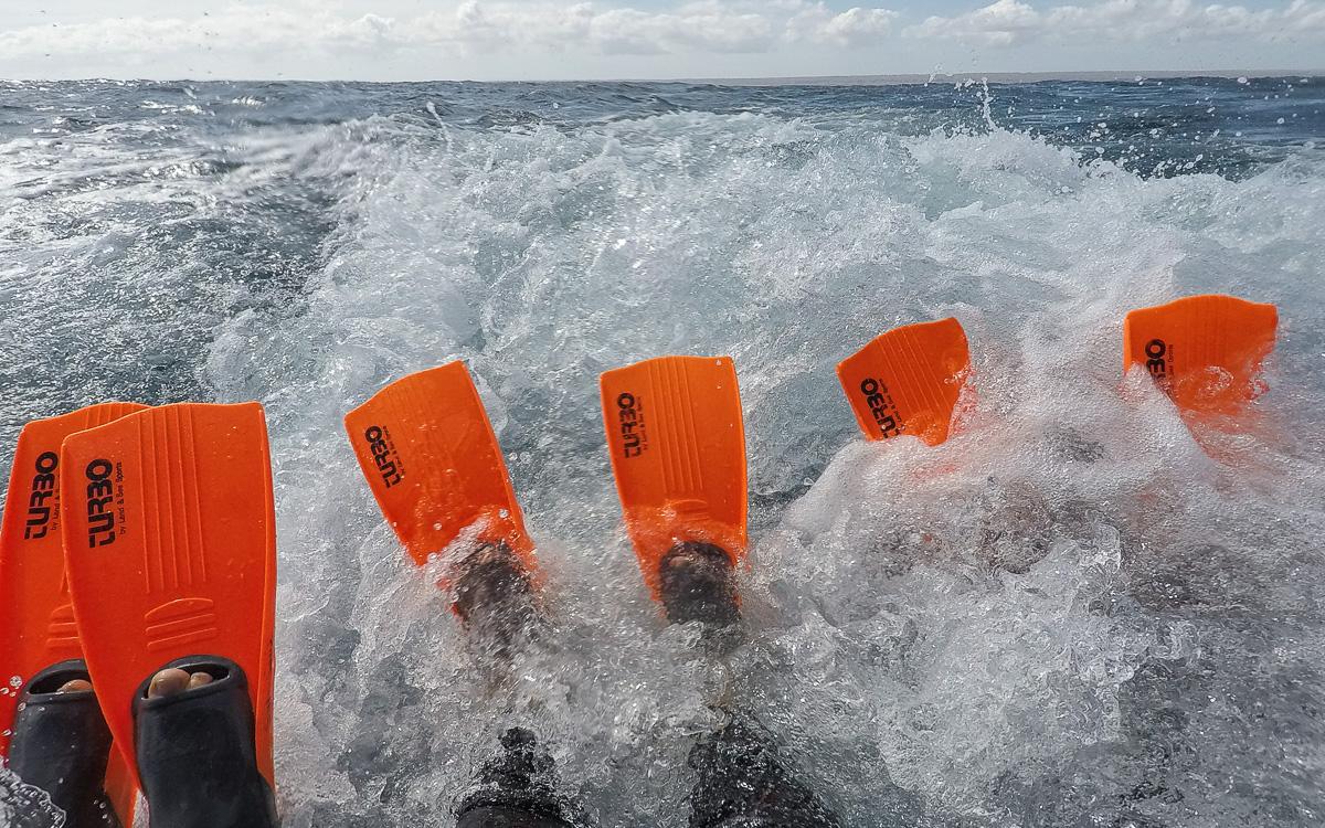 Bereit zum Schwimmen mit Walhaien