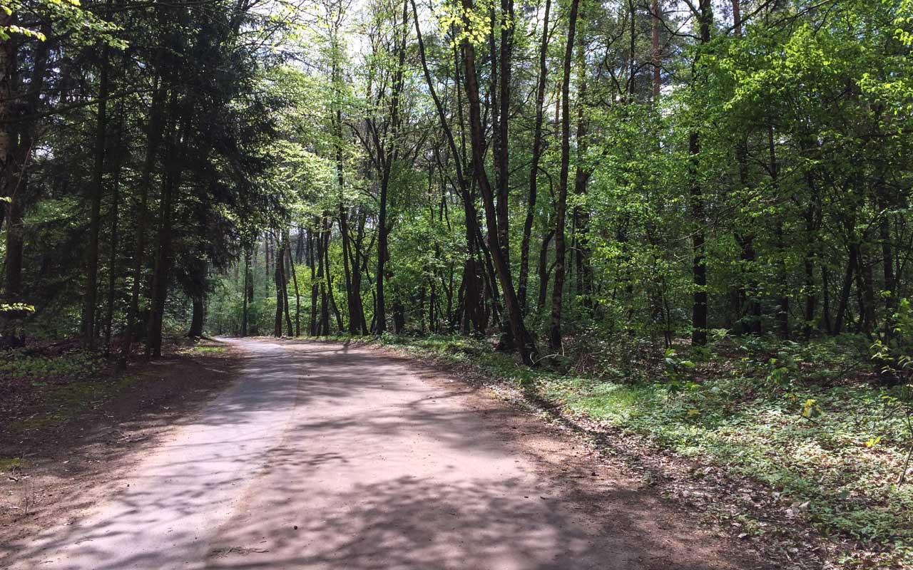 Holland Radtour Wald