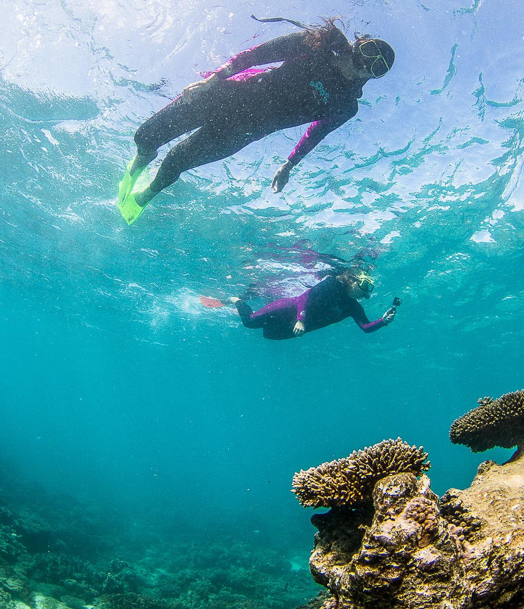 schnorcheln-korallenriff-ningaloo-reef