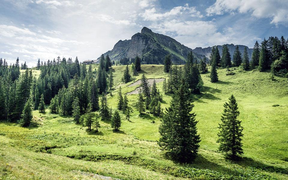 bregenzerwald-wandern-mellau-sommer