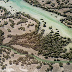 Mangroven Abu Dhabi Rundflug