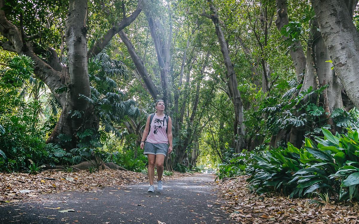 Botanischer Garten Adelaide |Australien