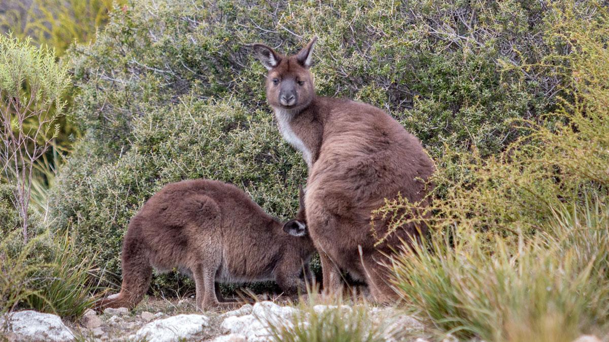 Kangaroo Island: Tipps & Highlights für das Naturparadies in Südaustralien