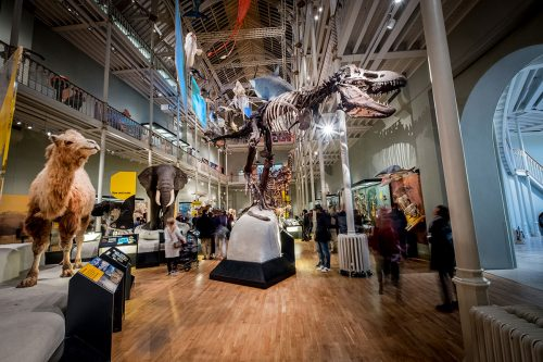 National Museum of Scotland - Tiere