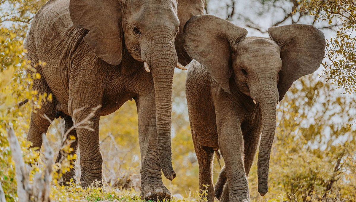 Krüger nationalpark südafrika safari guide mit tipps & erfahrung