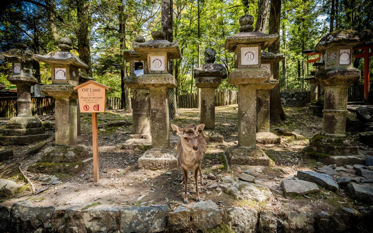 Abenteuer Japan: Highlights und die schönsten Orte unserer Rundreise 21