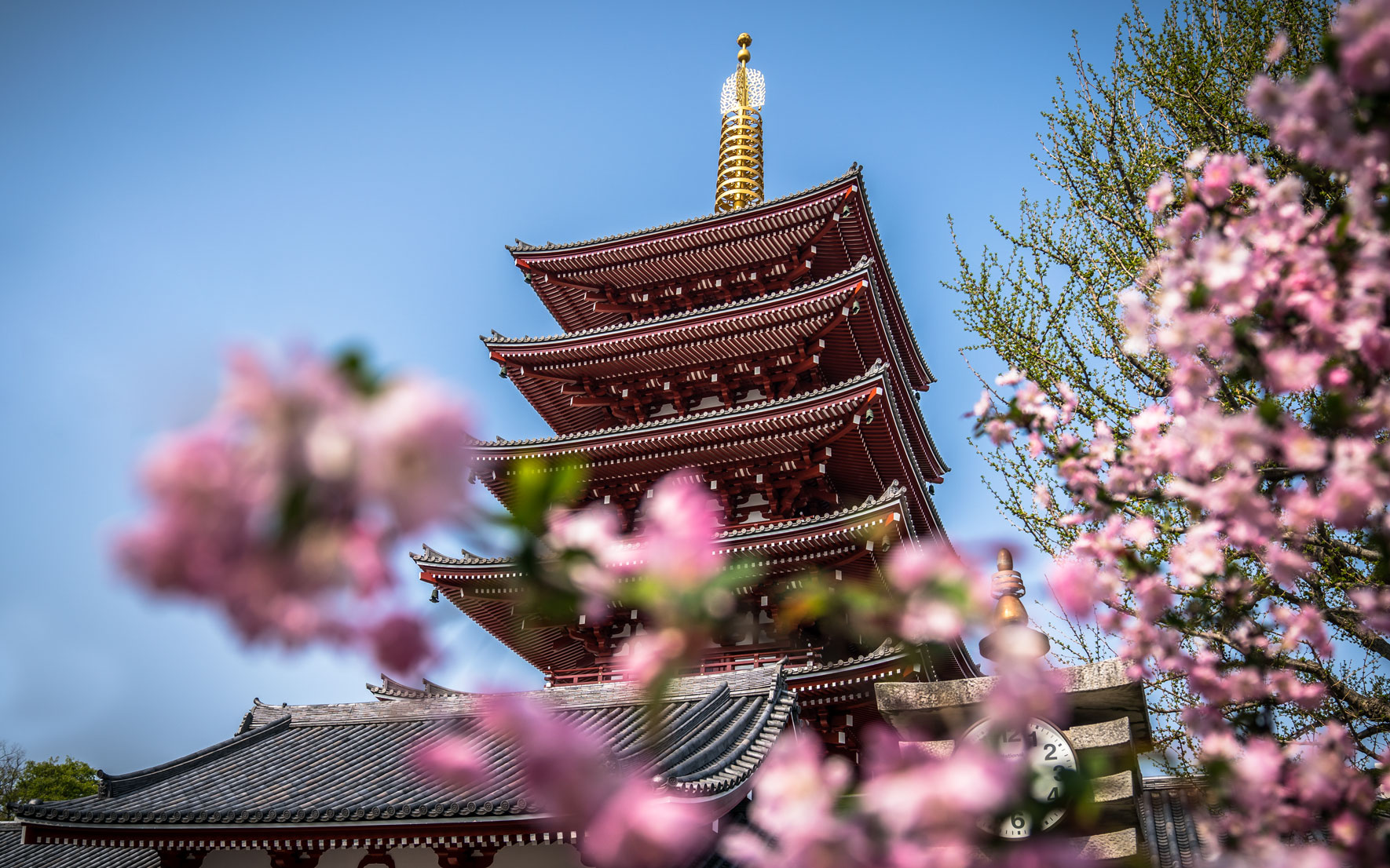 Beste Reisezeit Japan Kirschblüte Tokio