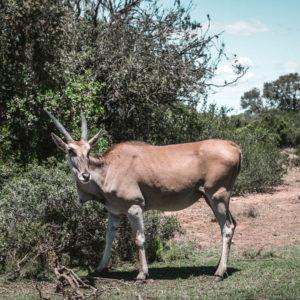 Garden Route Südafrika – Tipps, Highlights und Route für euren Roadtrip 14