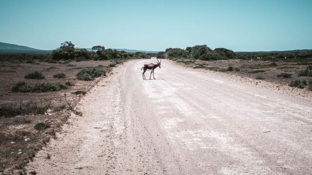 De Hoop Nature Reserve Tiere