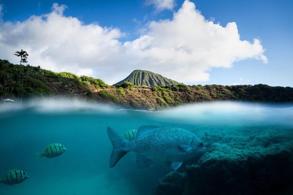 Fische Hanauma Bay Oahu Hawaii