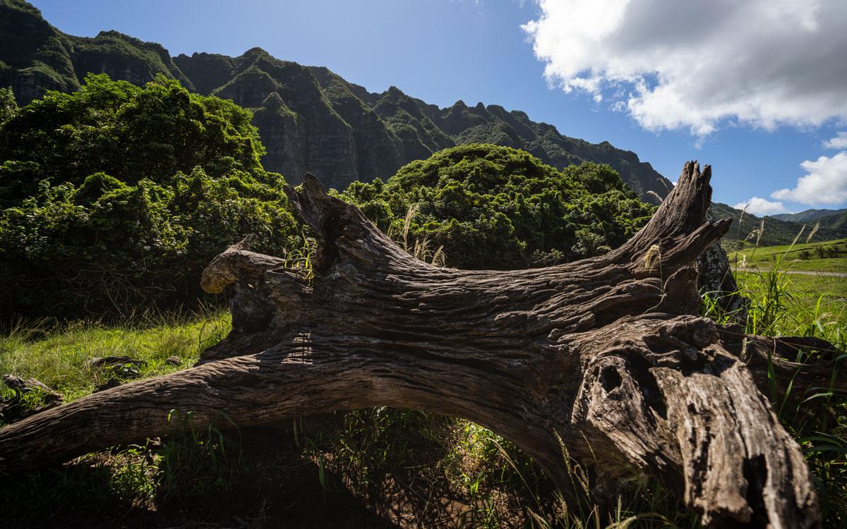 Oahu, Hawaii: 21 Orte, Aktivitäten und Tipps für die Insel O'ahu 44