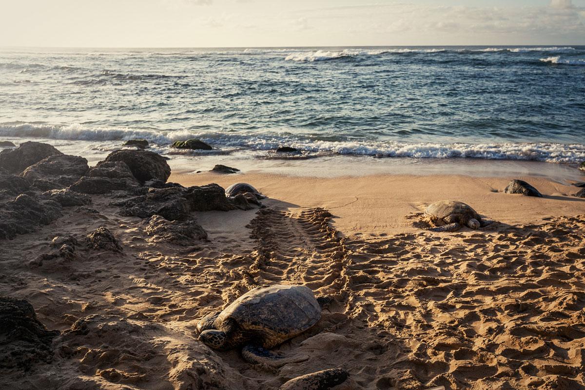 Oahu, Hawaii: 21 Orte, Aktivitäten und Tipps für die Insel O'ahu 55