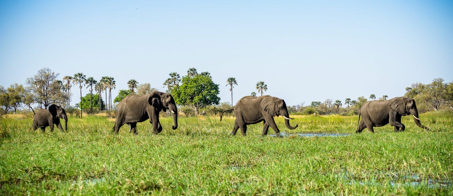 Elefanten im Okavango Delta Botswana
