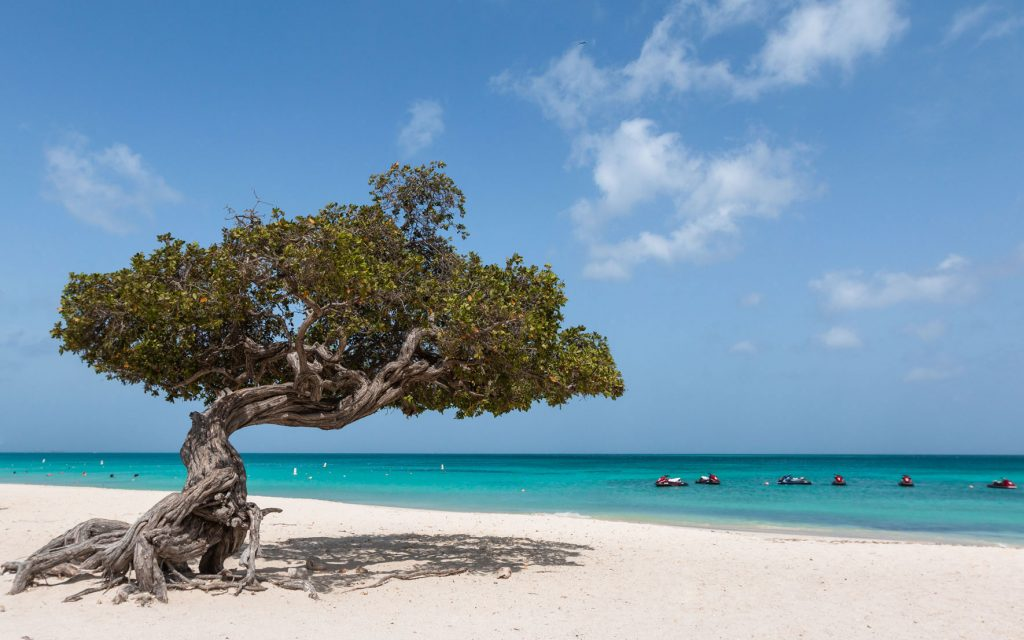 Divi Divi Baum Eagle Beach Aruba