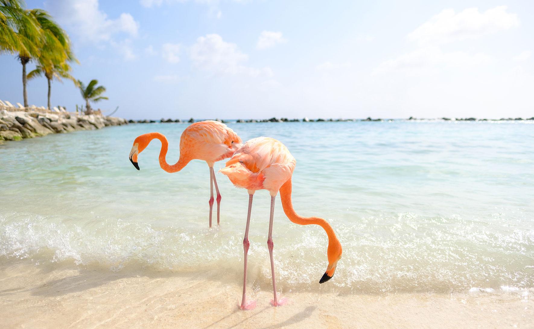 Flamingos auf Renaissance Island. Aruba. Fotocredit: Ines Thomsen