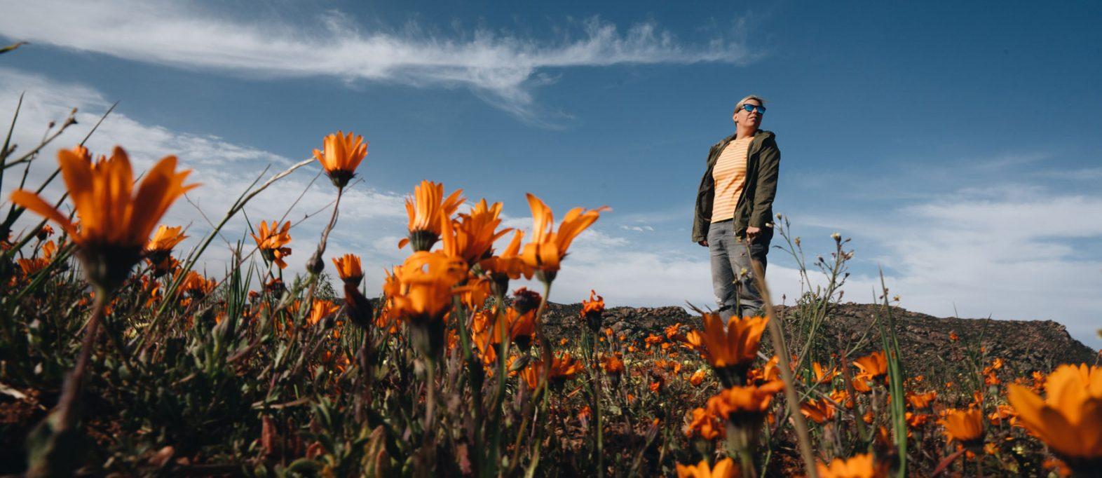 Orange leuchtende Wildblumen, Namaqualand
