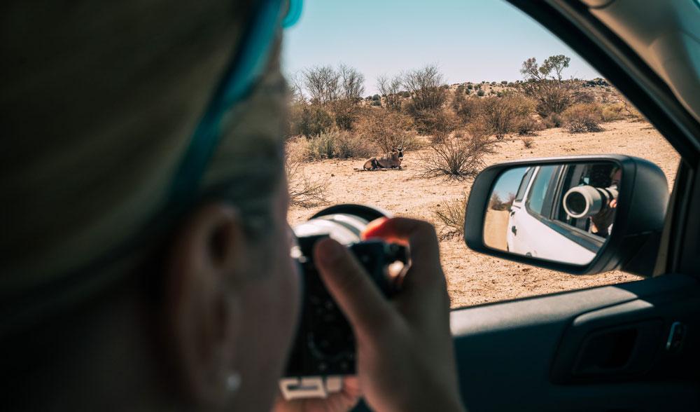 Oryx beim Game Drive fotografieren