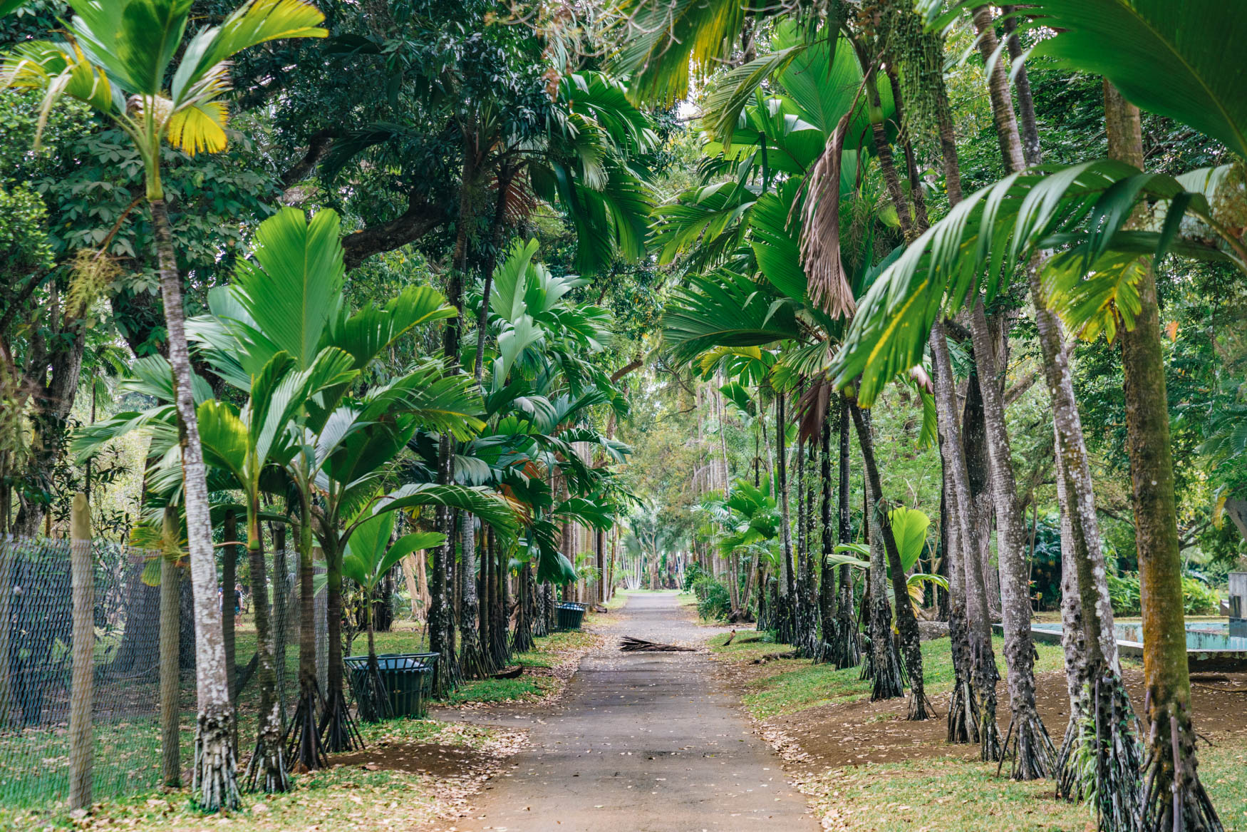 Eingang Botanischer Garten Pamplemousse