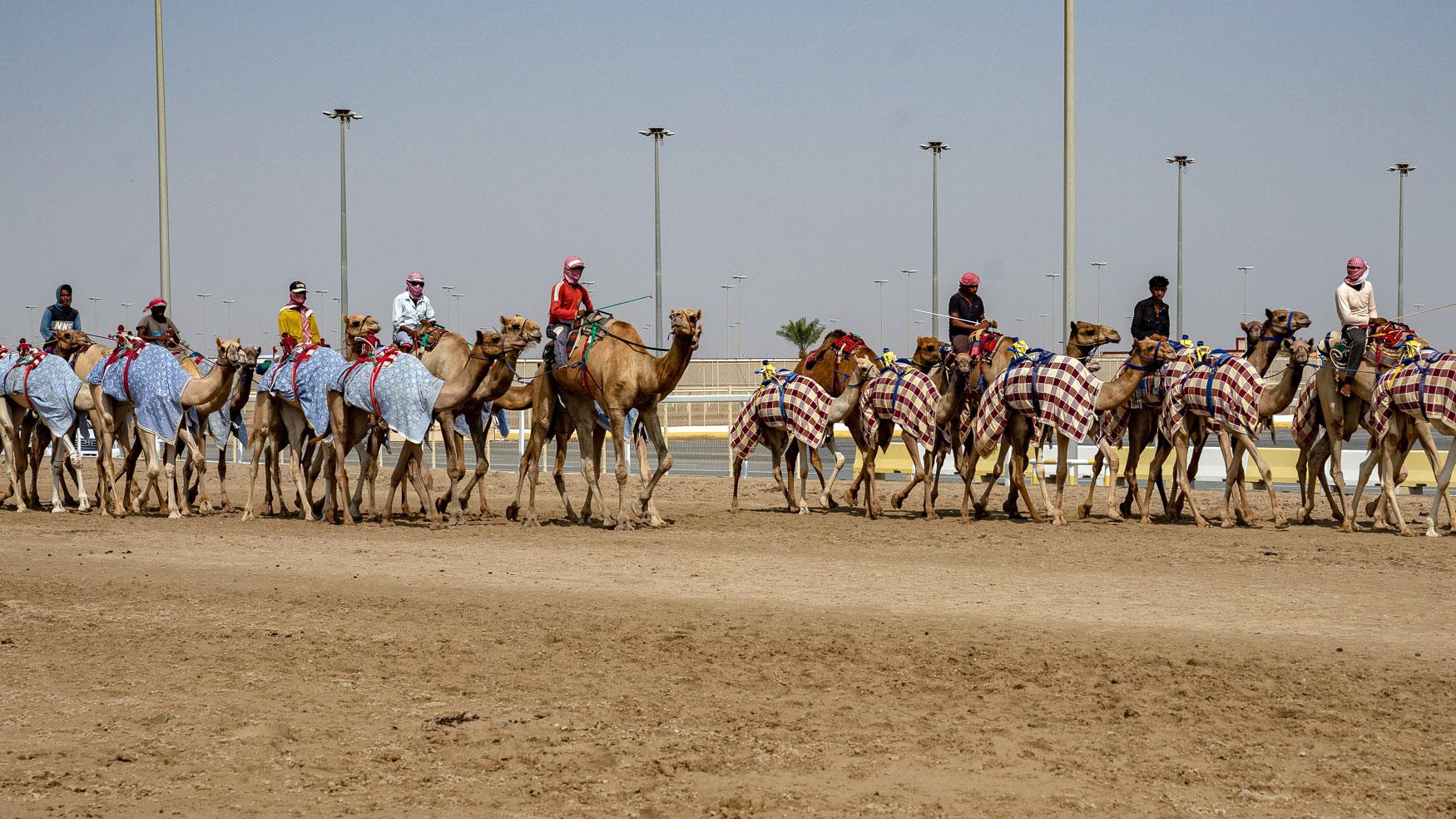 Qatar Tipps: Kamelrennbahn Al Shahaniya