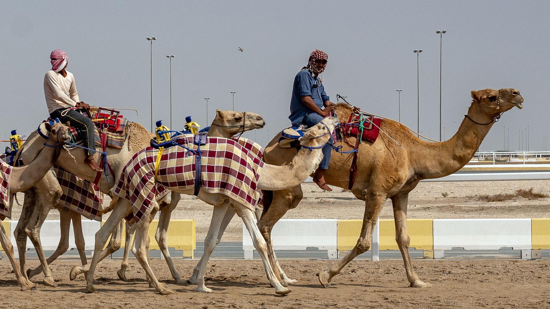 qatar-tipps-kamelrennen