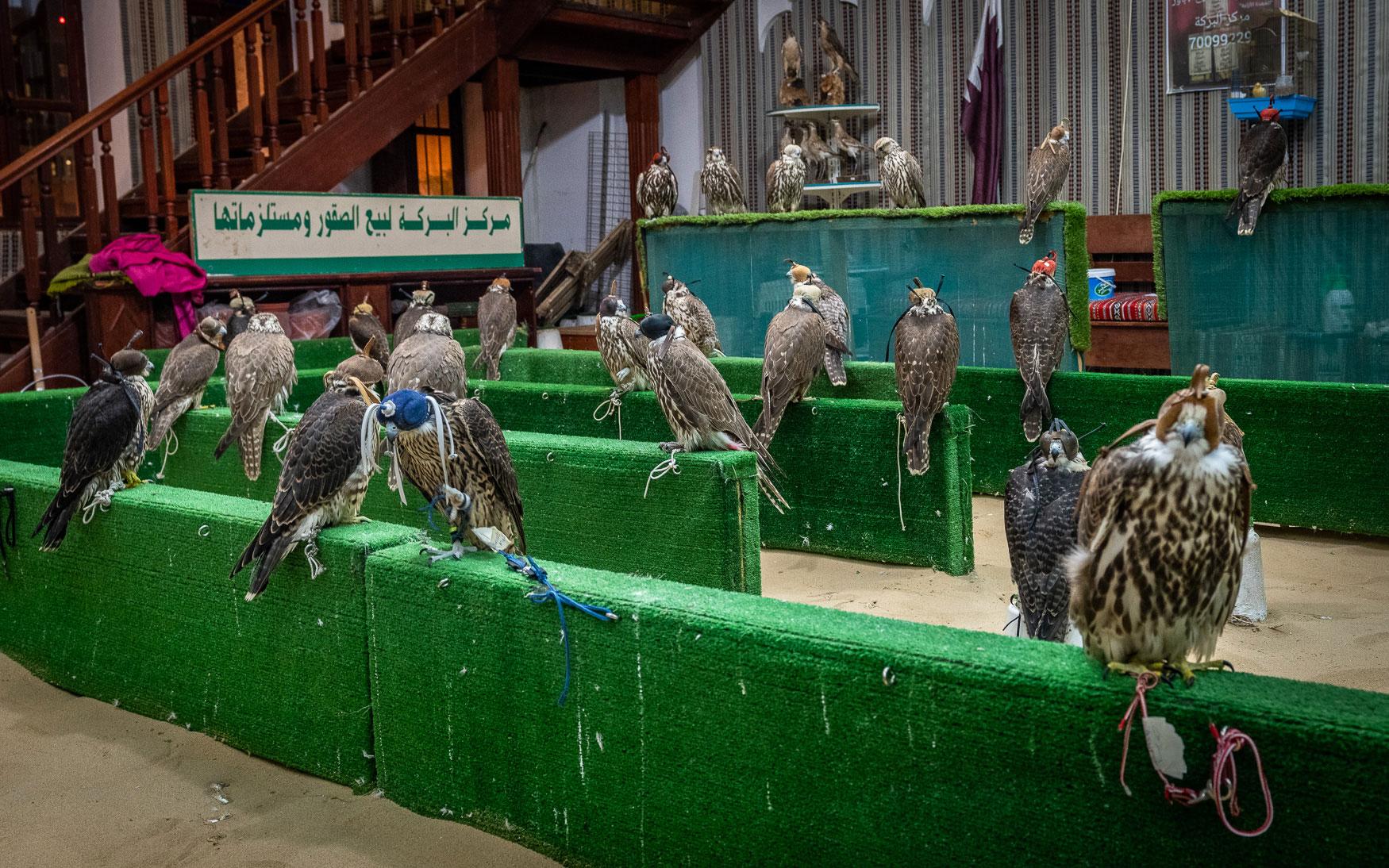 Qatar Tipps: Falken kaufen Souk Waqif