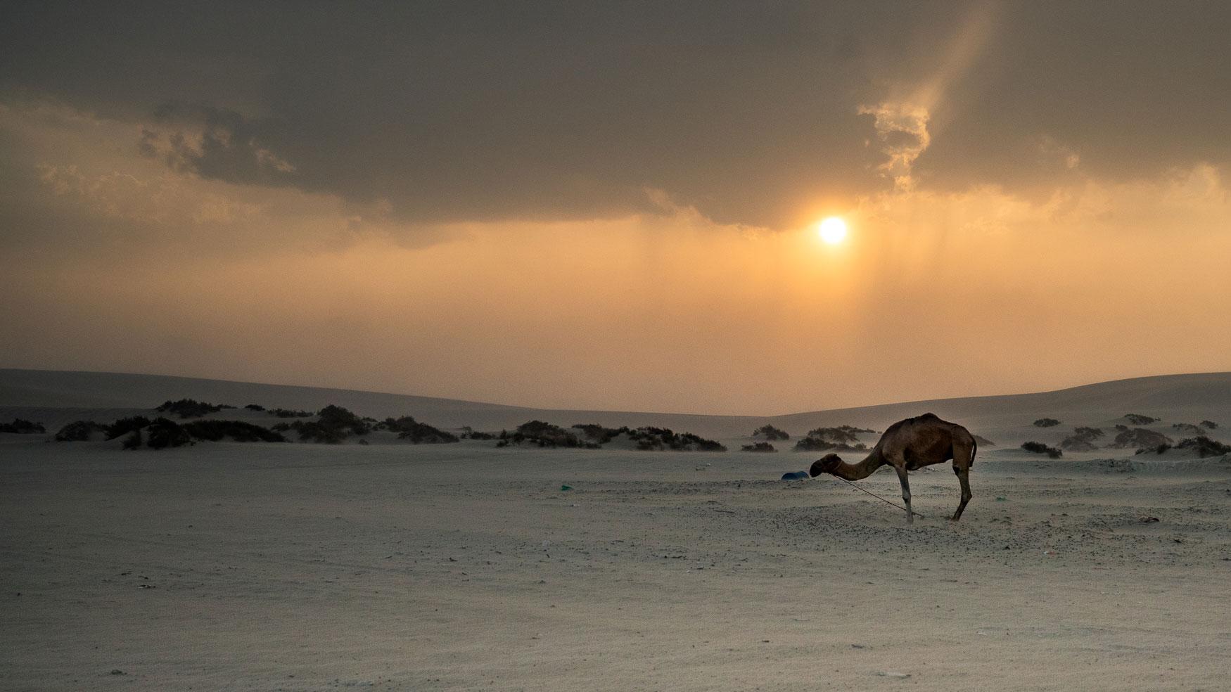Wüstensafari Qatar Tipp.