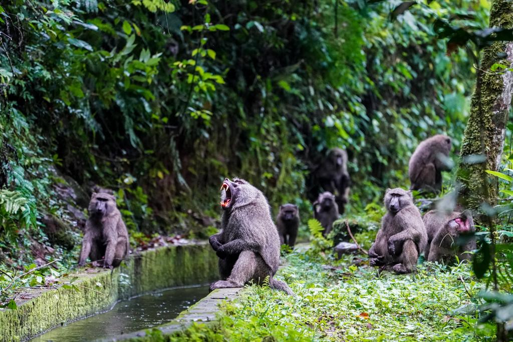 Highlights in Uganda: Gorillas, Löwen, Giraffen & Wasserprojekte 130