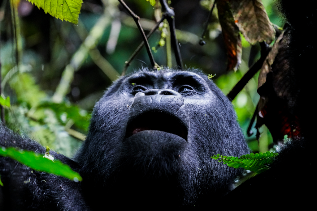 Highlights in Uganda: Gorillas, Löwen, Giraffen & Wasserprojekte 141