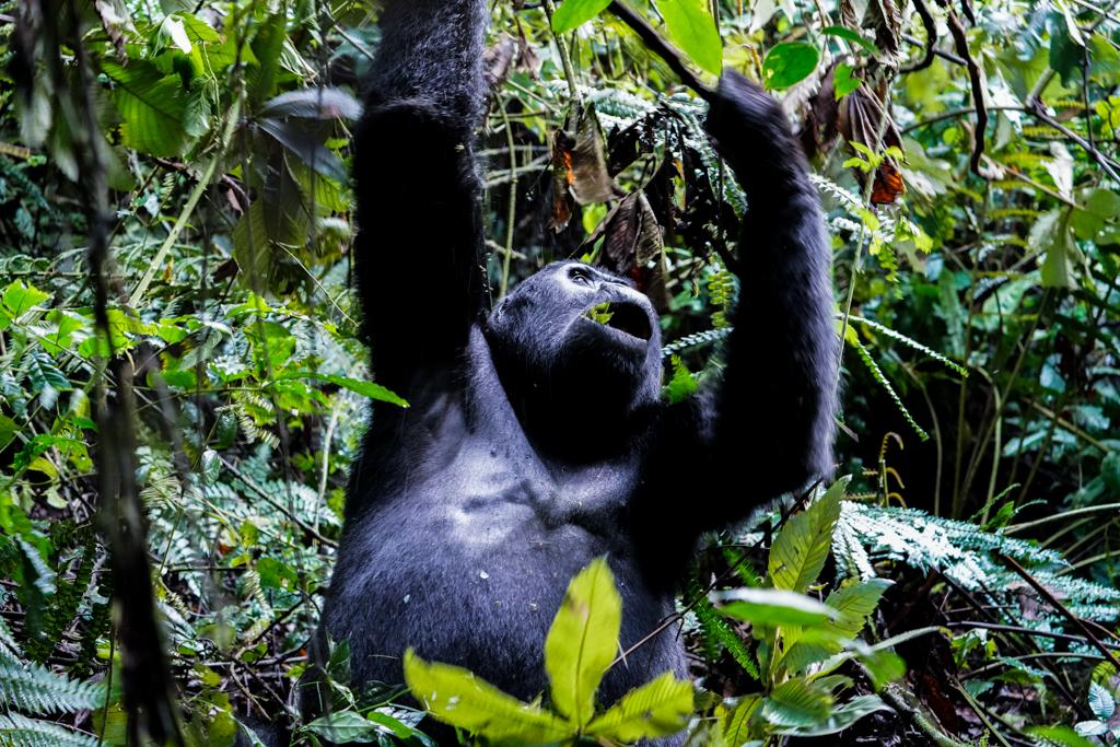 Highlights in Uganda: Gorillas, Löwen, Giraffen & Wasserprojekte 140
