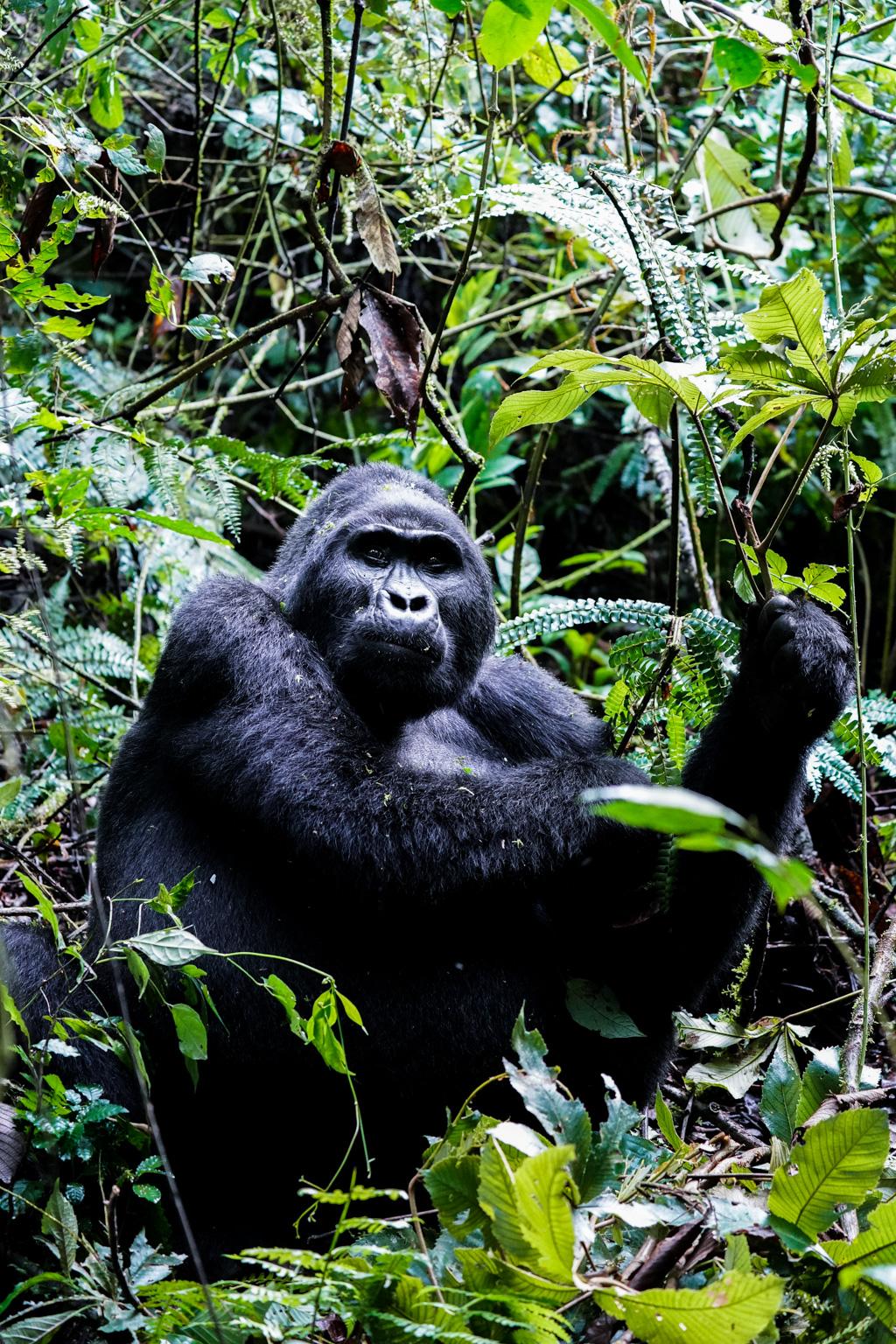 Highlights in Uganda: Gorillas, Löwen, Giraffen & Wasserprojekte 139