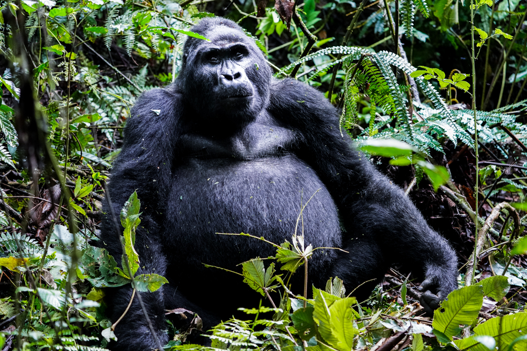 Highlights in Uganda: Gorillas, Löwen, Giraffen & Wasserprojekte 138
