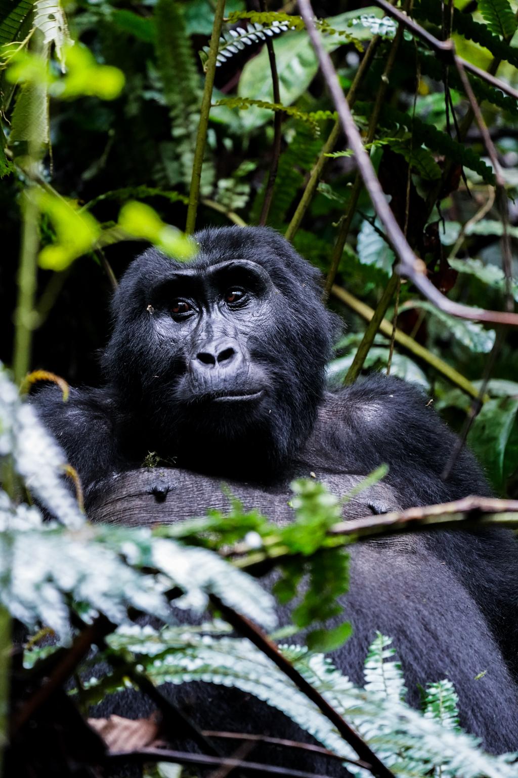 Highlights in Uganda: Gorillas, Löwen, Giraffen & Wasserprojekte 137
