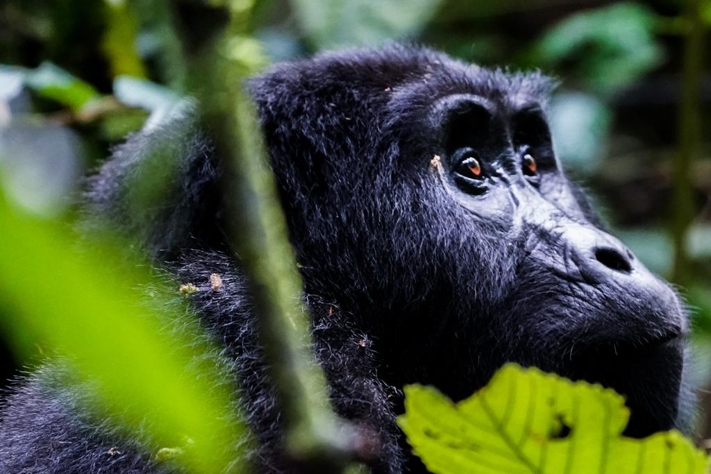 Highlights in Uganda: Gorillas, Löwen, Giraffen & Wasserprojekte 135