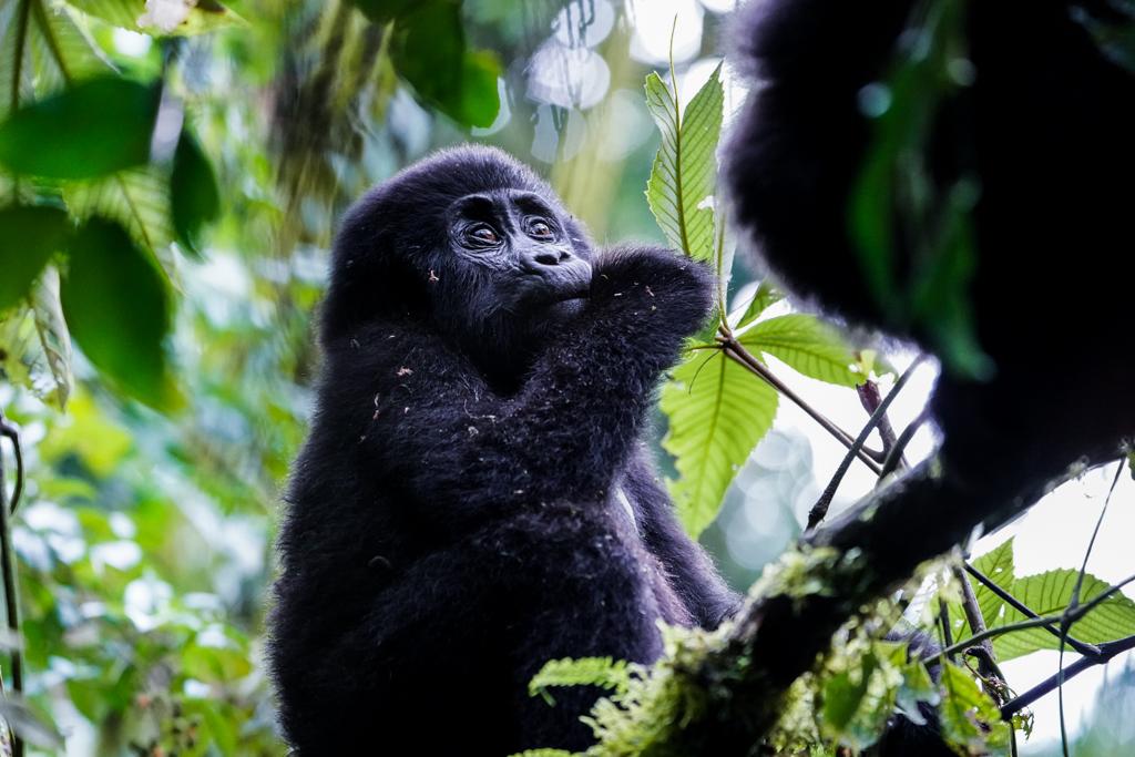 Highlights in Uganda: Gorillas, Löwen, Giraffen & Wasserprojekte 134