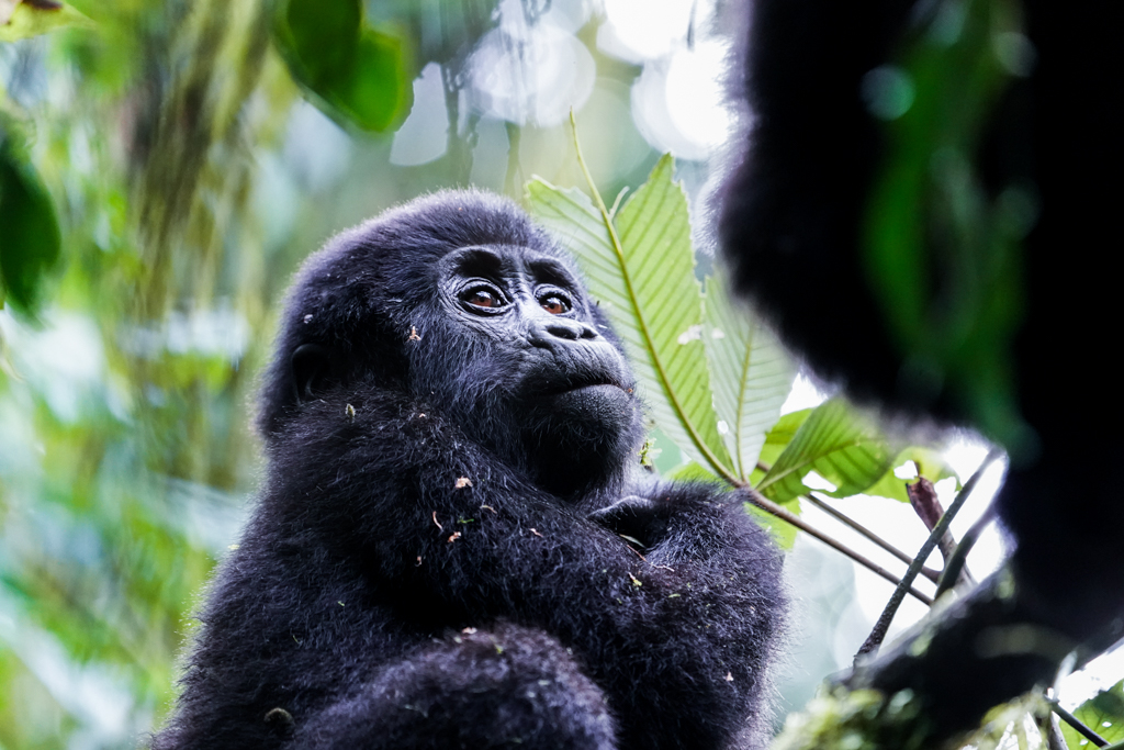 Highlights in Uganda: Gorillas, Löwen, Giraffen & Wasserprojekte 133