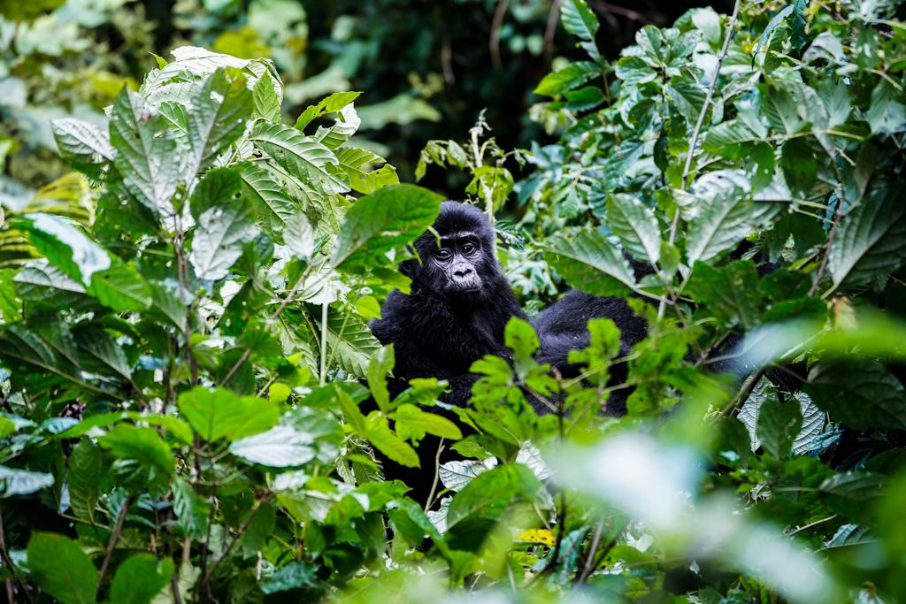 Highlights in Uganda: Gorillas, Löwen, Giraffen & Wasserprojekte 146