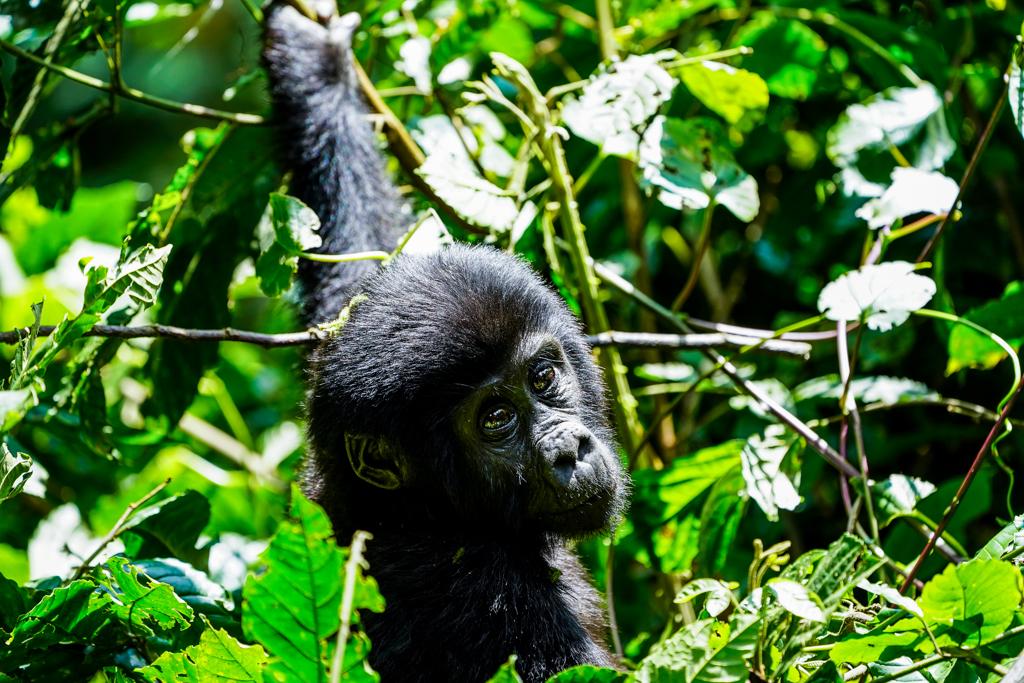 Highlights in Uganda: Gorillas, Löwen, Giraffen & Wasserprojekte 145