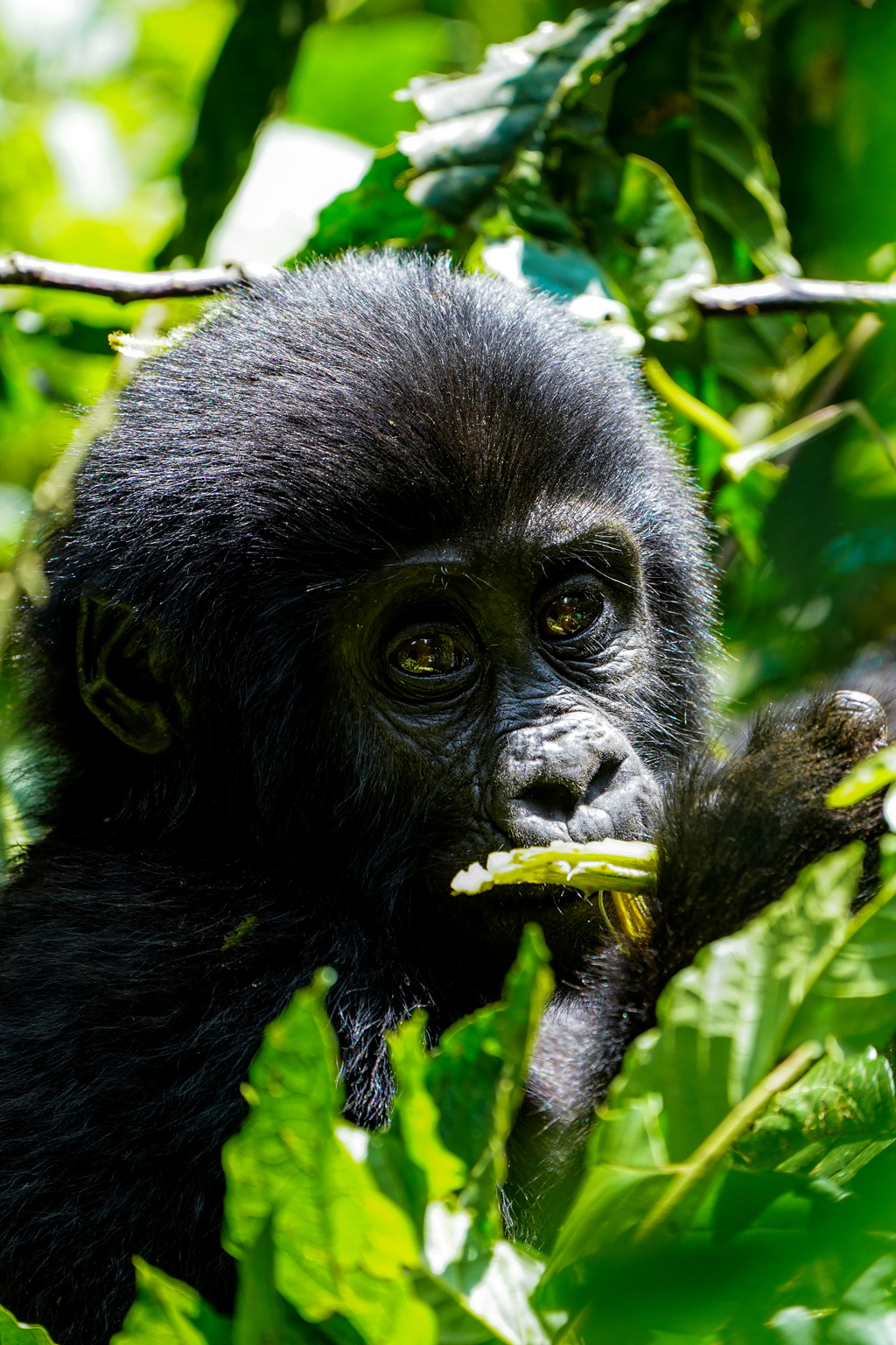 Highlights in Uganda: Gorillas, Löwen, Giraffen & Wasserprojekte 147