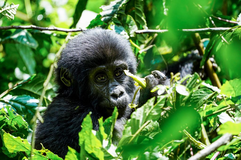 Highlights in Uganda: Gorillas, Löwen, Giraffen & Wasserprojekte 144