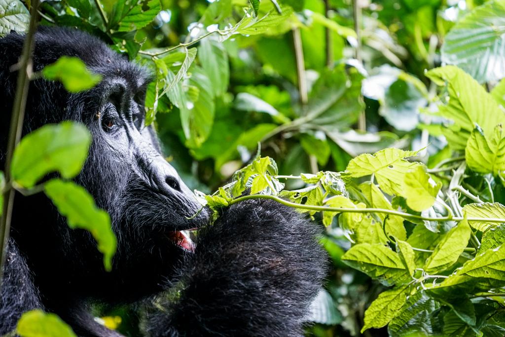 Highlights in Uganda: Gorillas, Löwen, Giraffen & Wasserprojekte 143