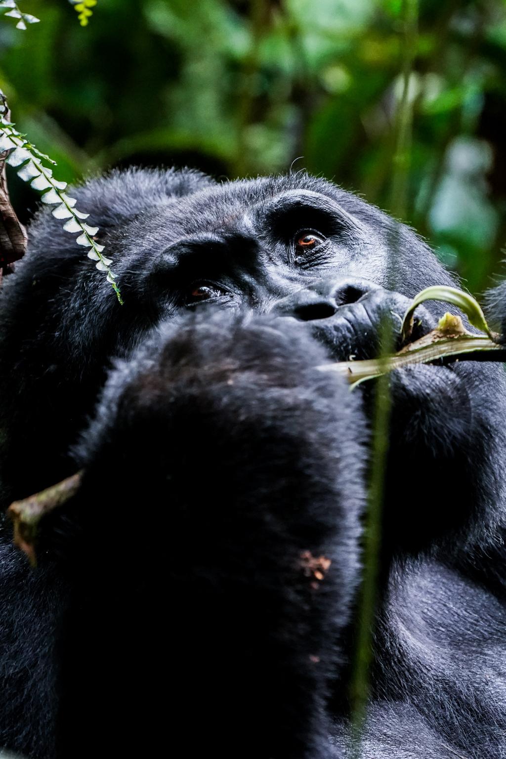 Highlights in Uganda: Gorillas, Löwen, Giraffen & Wasserprojekte 142