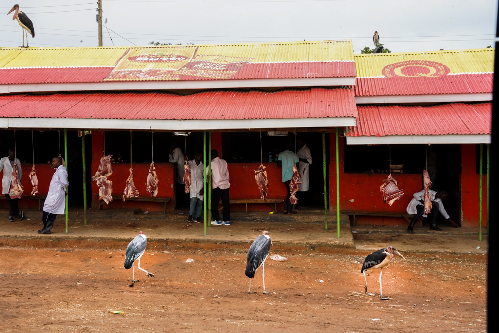 Highlights in Uganda: Gorillas, Löwen, Giraffen & Wasserprojekte 187