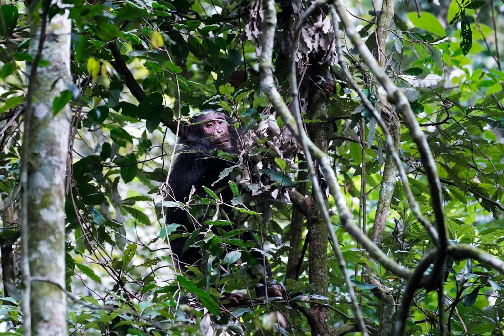 Highlights in Uganda: Gorillas, Löwen, Giraffen & Wasserprojekte 98