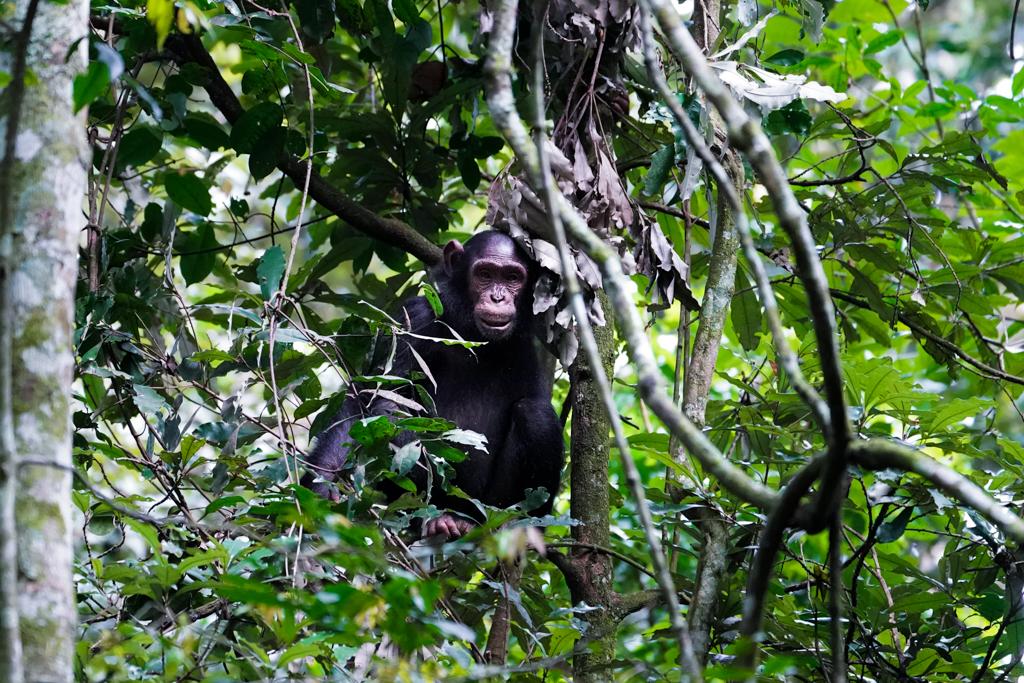 Highlights in Uganda: Gorillas, Löwen, Giraffen & Wasserprojekte 97
