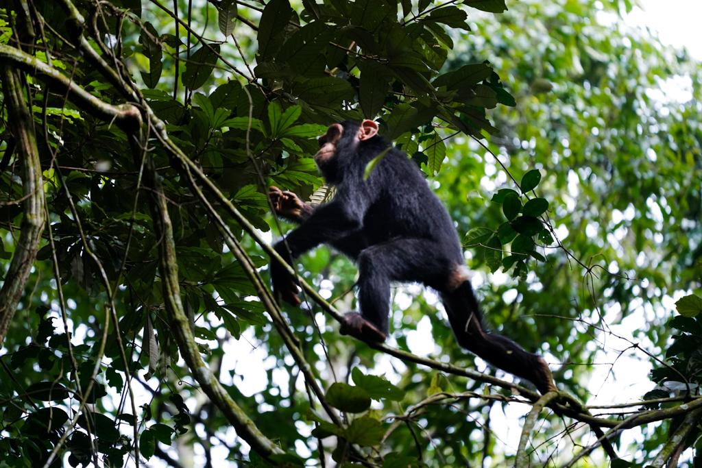 Highlights in Uganda: Gorillas, Löwen, Giraffen & Wasserprojekte 99