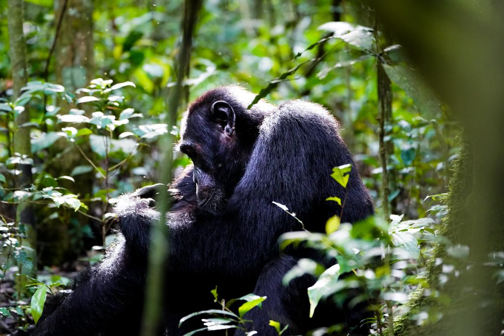 Highlights in Uganda: Gorillas, Löwen, Giraffen & Wasserprojekte 101