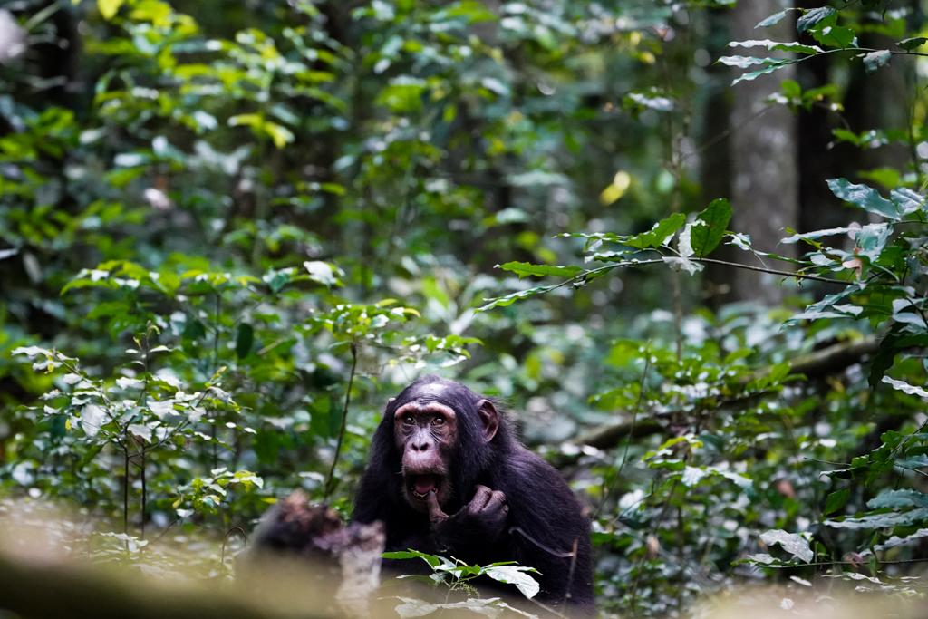 Highlights in Uganda: Gorillas, Löwen, Giraffen & Wasserprojekte 95