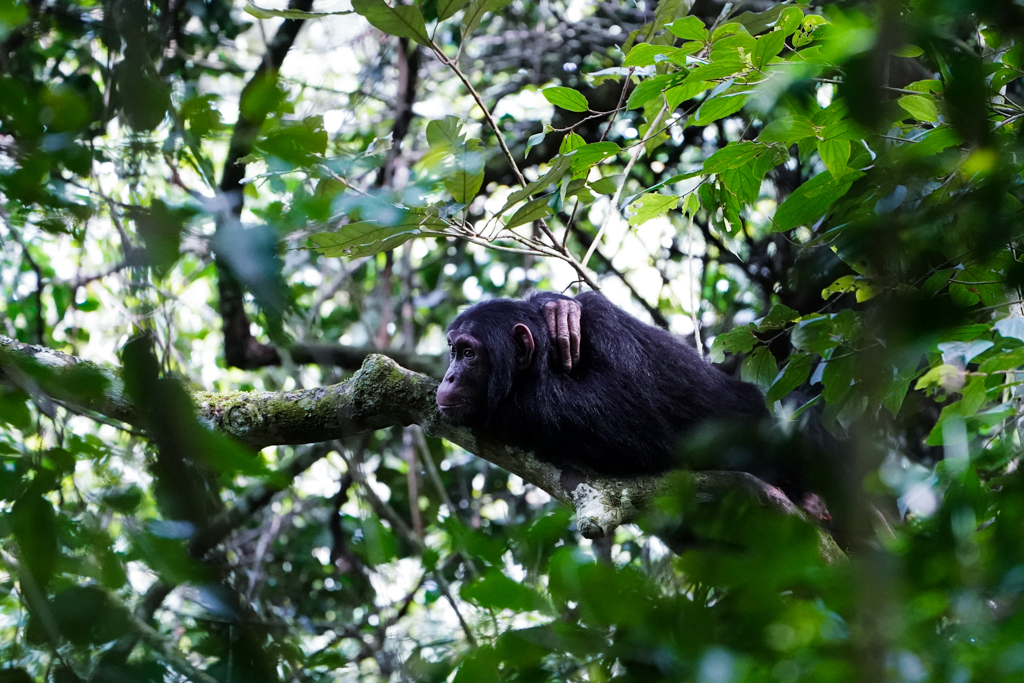 Highlights in Uganda: Gorillas, Löwen, Giraffen & Wasserprojekte 100