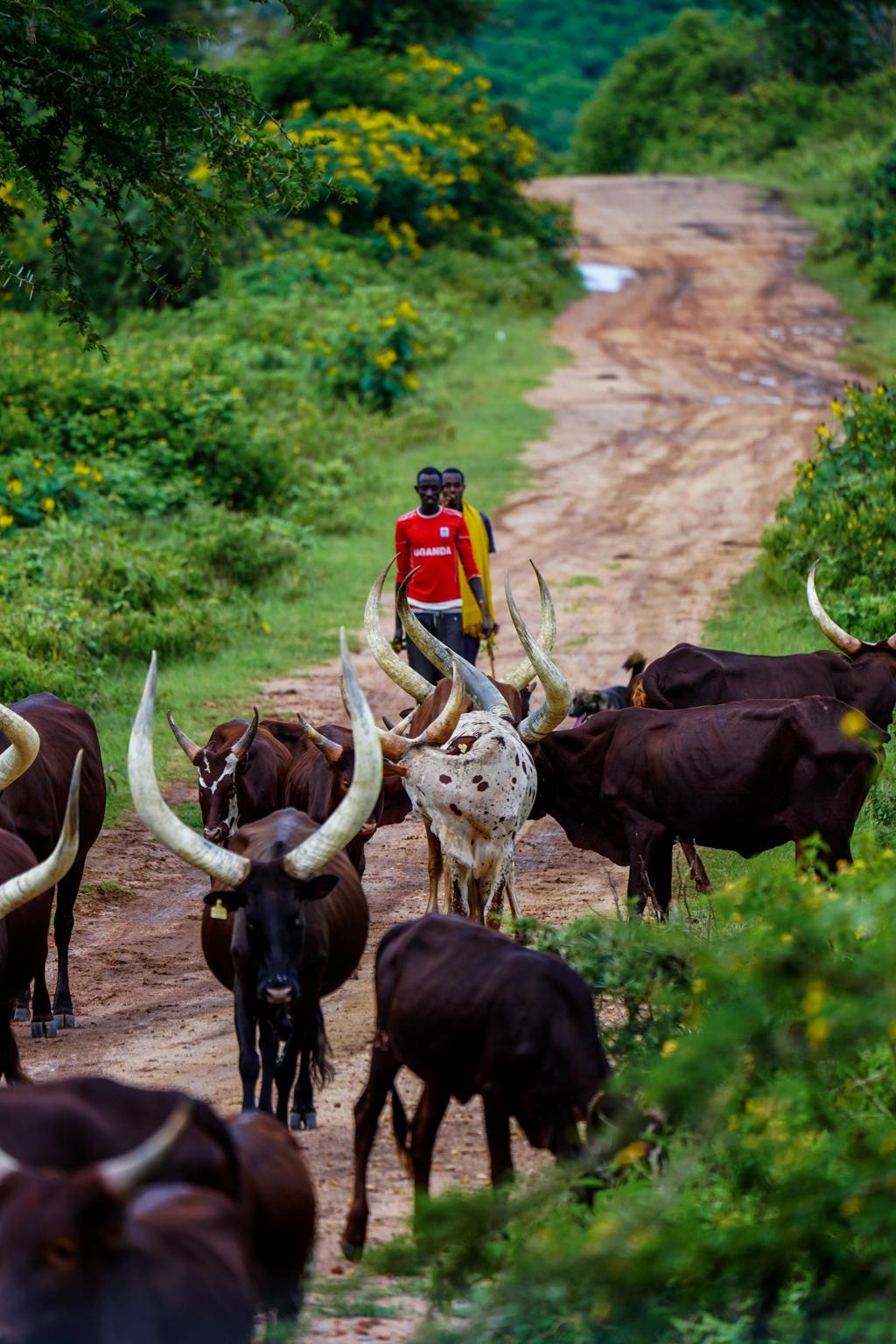 Highlights in Uganda: Gorillas, Löwen, Giraffen & Wasserprojekte 168